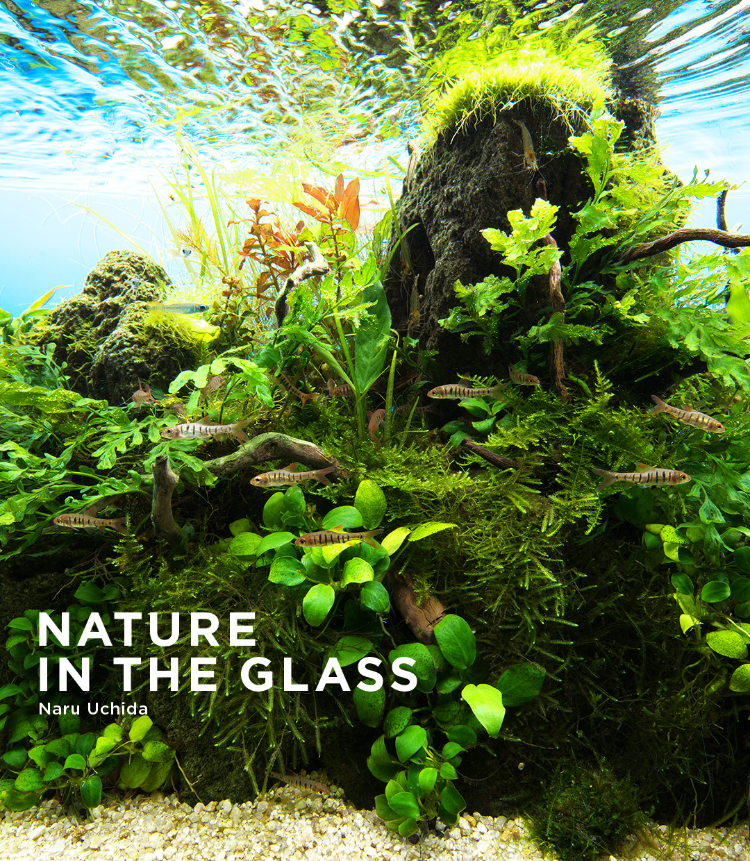 NATURE IN THE GLASS 'Stream in the rainy season'