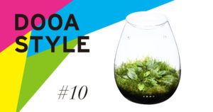 DOOA STYLE #10 'Cherishing small Cryptocoryne in a spathe-like glass container'
