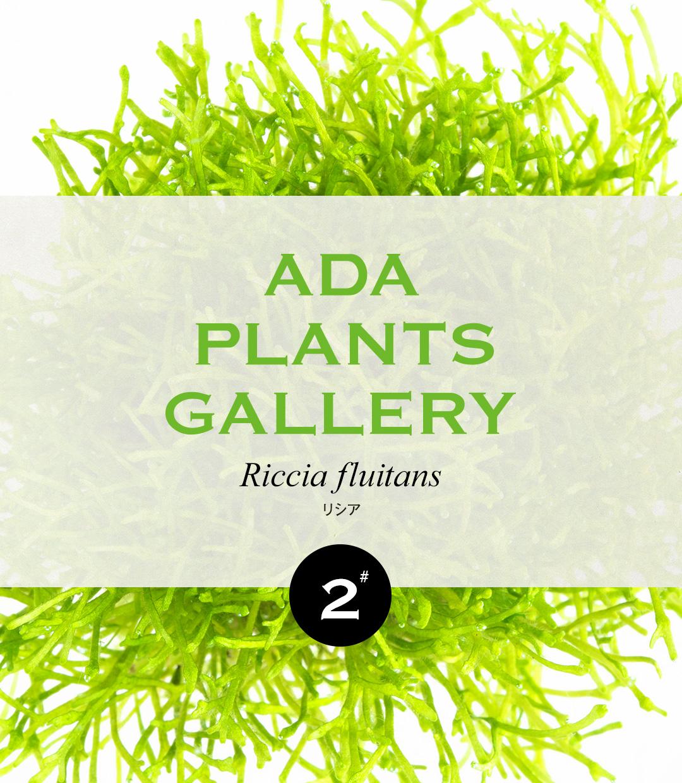 ADA PLANTS GALLERY #02 Riccia fluitans