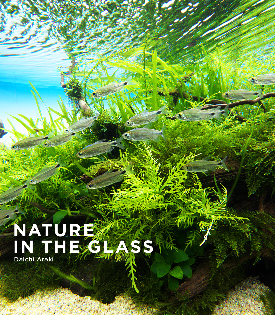 NATURE IN THE GLASS 'Nestling up to an old tree'
