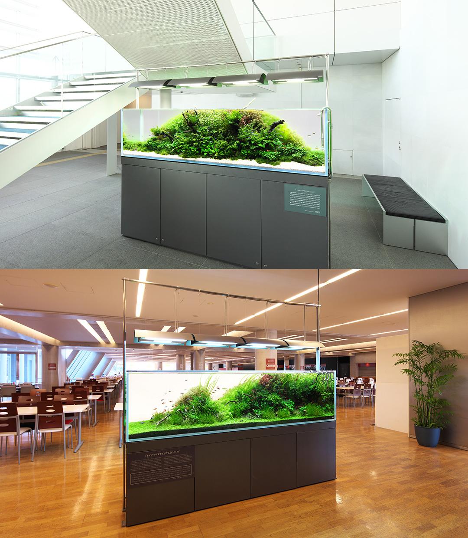 NATURE  IN THE GLASS 'Nature Aquarium in public facilities'