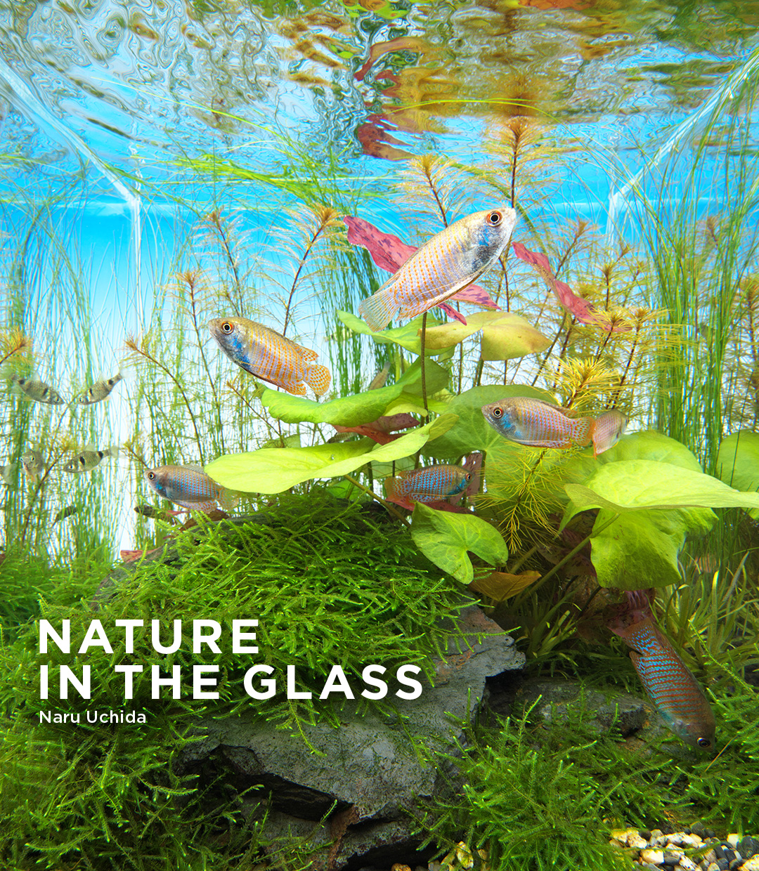 NATURE  IN THE GLASS 'Peaceful Nymphaea'