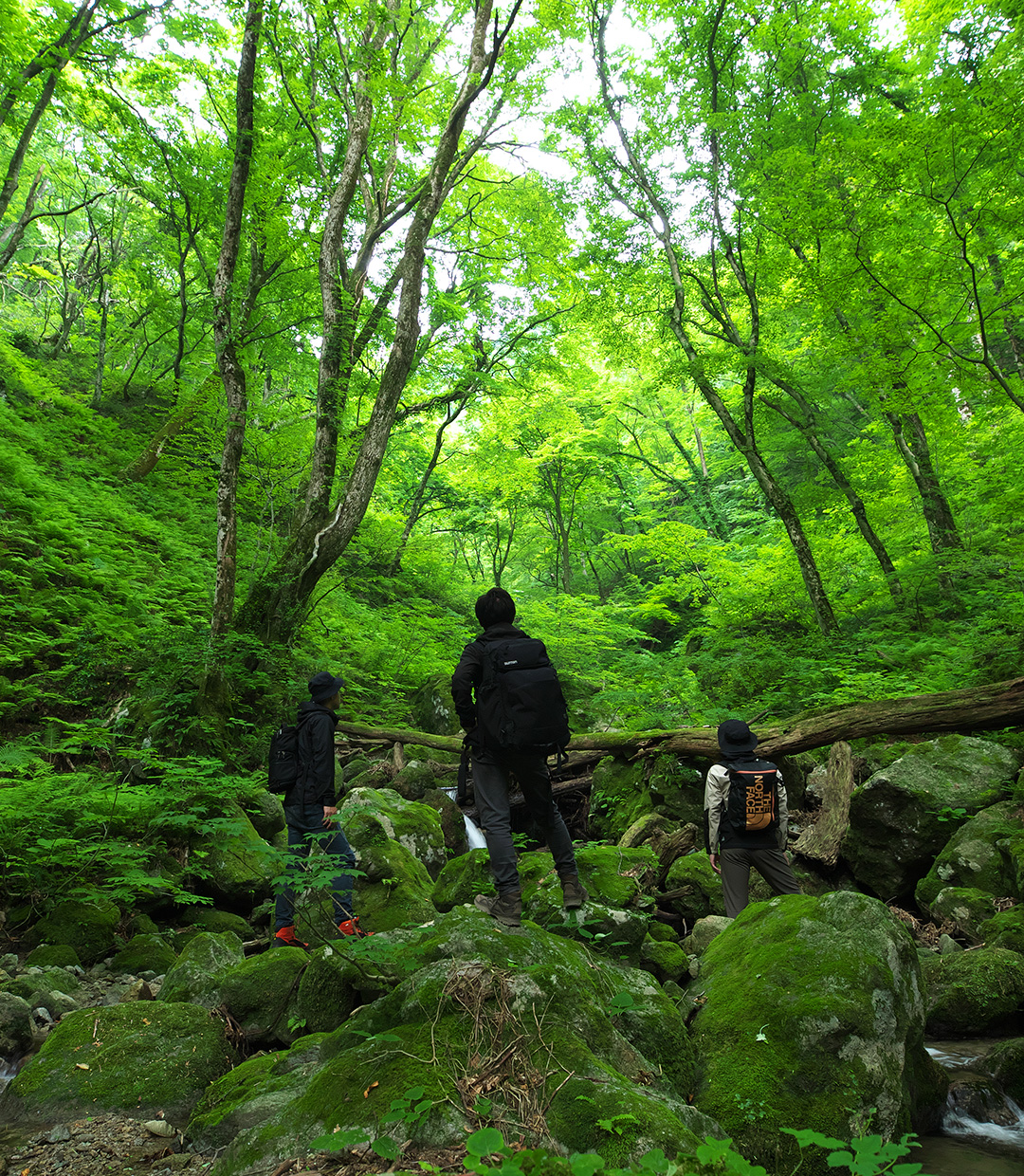 FIELD REPORT -Searching for clues from nature-