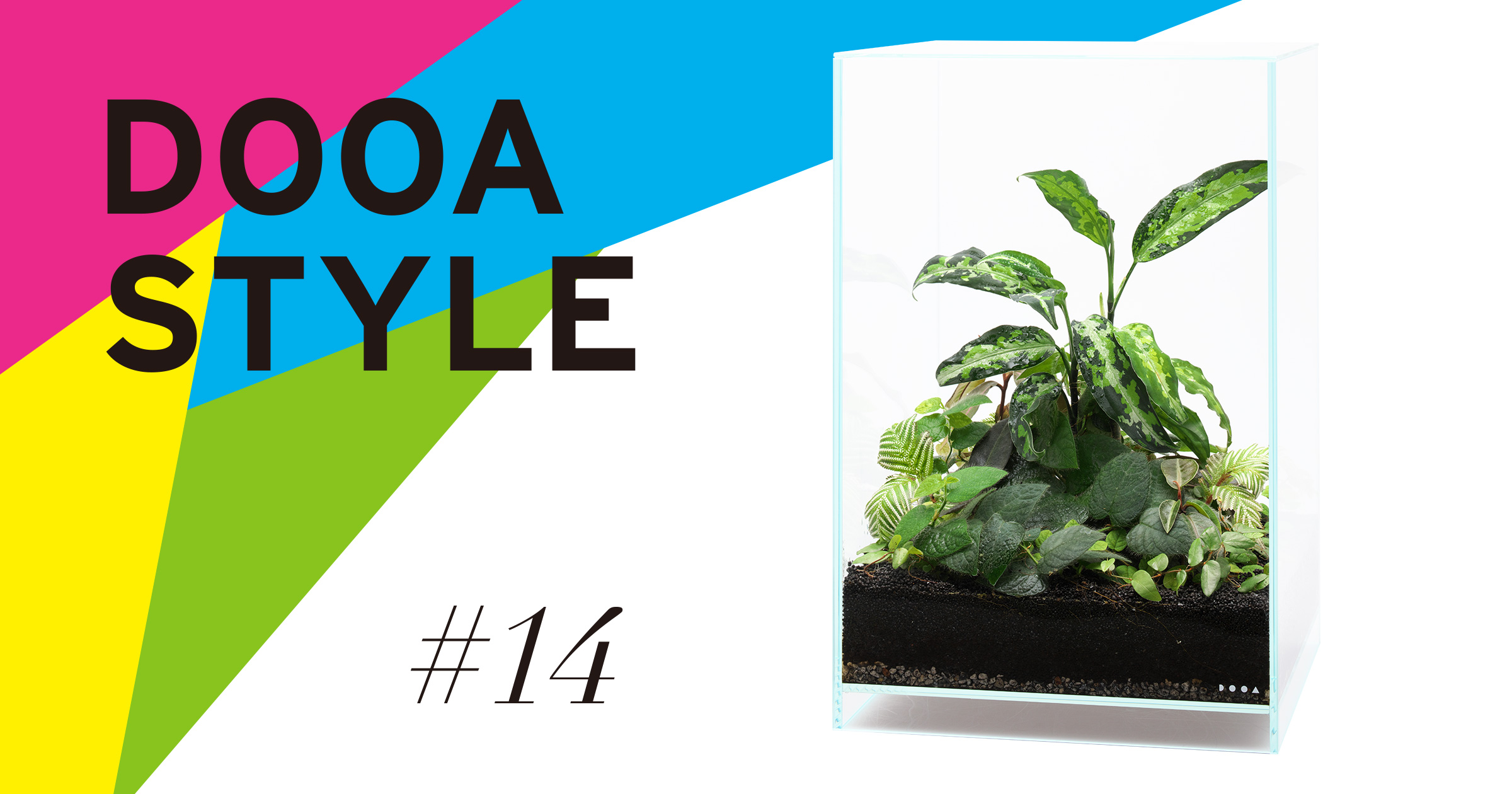 DOOA STYLE #14  Creating a Paludarium without using composition materials