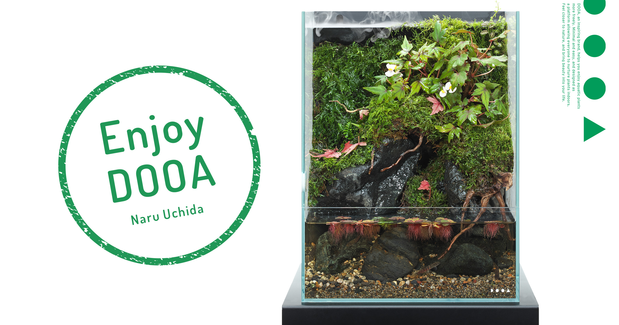 Enjoy DOOA 'Enjoying small Begonia species as an expression of scattered maple leaves'