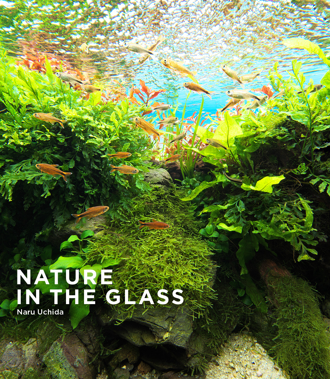 NATURE IN THE GLASS 'Yin and Yang'